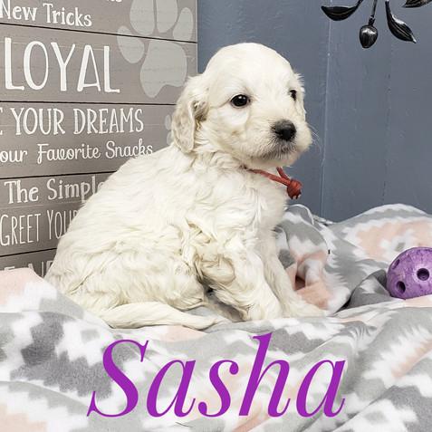 Sasha (2).jpeg