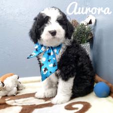Aurora (15).jpeg