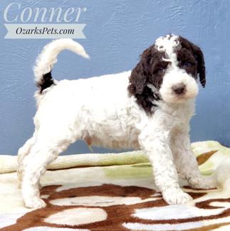 Conner (3).jpeg