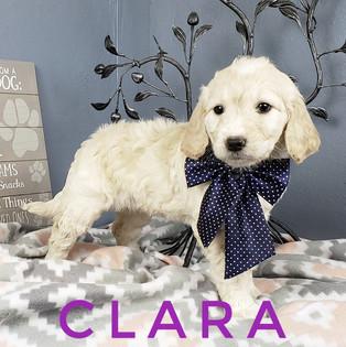 Clara (4).jpeg