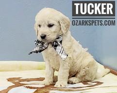 Tucker (7).jpeg
