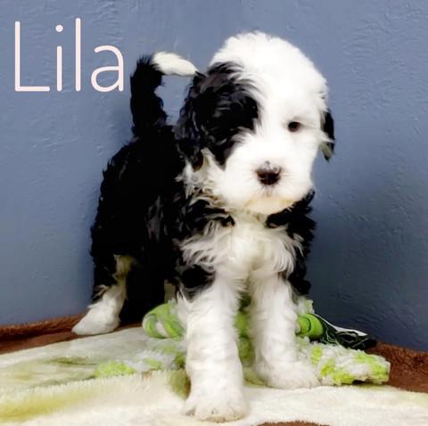 Lila (11).jpeg