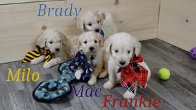Frankie Milo Brady Mac (2).jpg