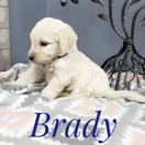 Brady (2).jpeg