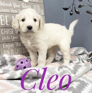 Cleo (3).jpeg