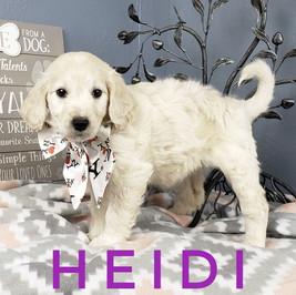 Heidi (8).jpeg