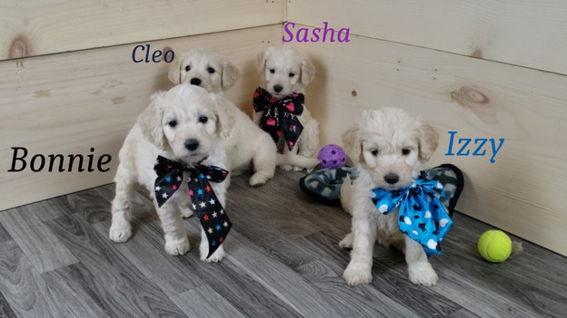 Bonnie Cleo Sasha Izzy (1).jpg