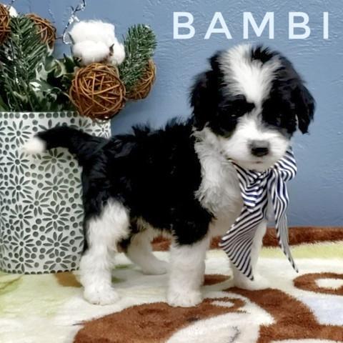 BAMBI (8).jpeg