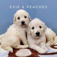 Evie Peaches (3).jpeg