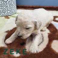 zeke (2).jpeg