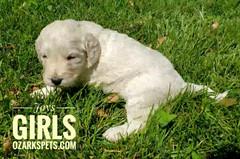 Joy Girls (10).jpeg