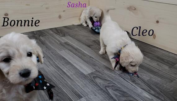 Bonnie Sasha Cleo.jpg