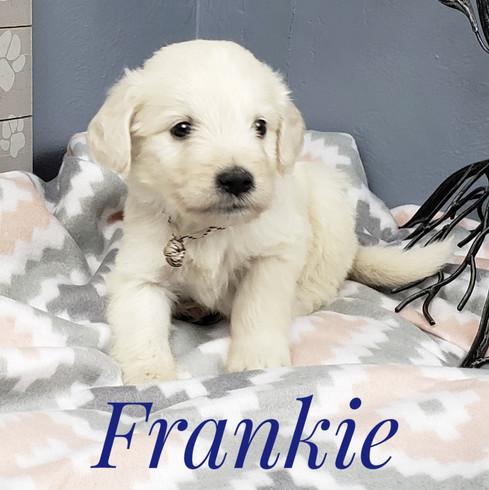 Frankie (1).jpeg