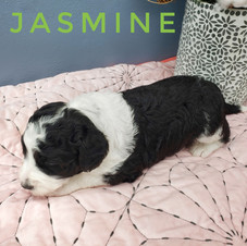 Jasmine (1).jpeg