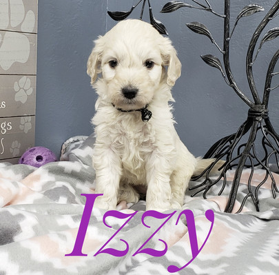 Izzy (4).jpeg