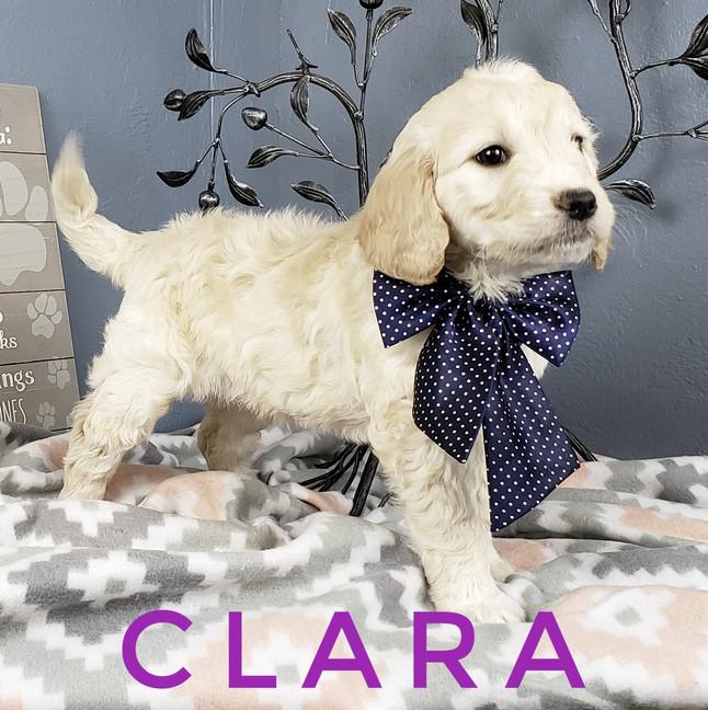 Clara (6).jpeg