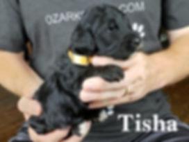 Tisha (4).jpg
