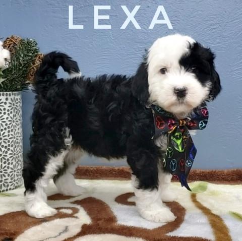 LEXA (5).jpeg