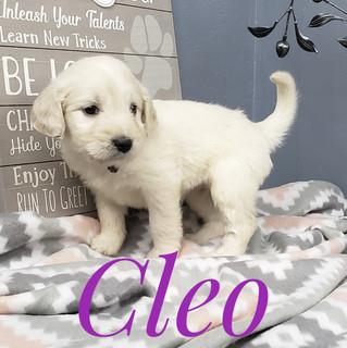 Cleo (8).jpeg