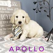 Apollo (1).jpeg