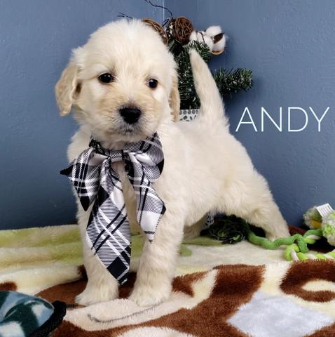 Andy (2).jpeg