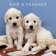 Evie Peaches (5).jpeg