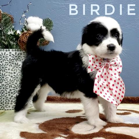 BIRDIE (7).jpeg
