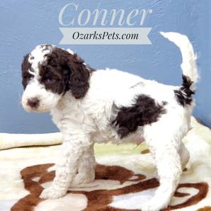 Conner (4).jpeg