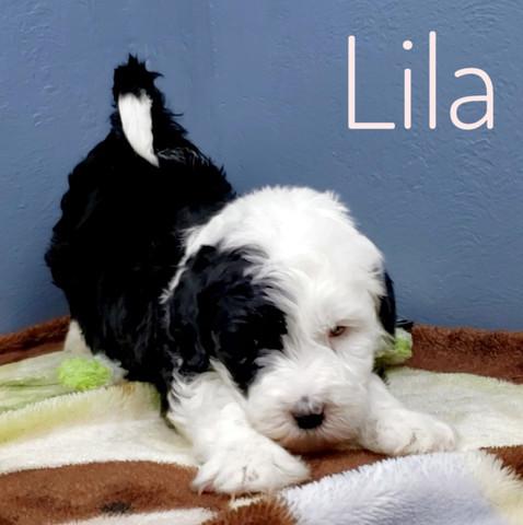 Lila (10).jpeg