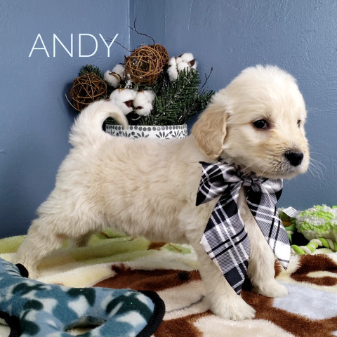 Andy (1).jpeg