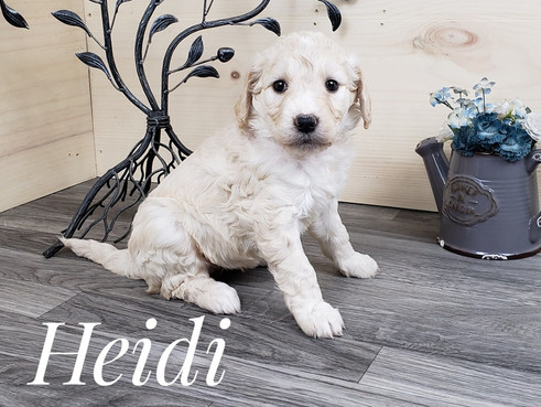 Heidi (2).jpg
