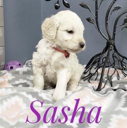 Sasha (6).jpeg