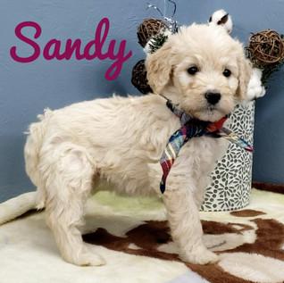 Sandy (1).jpeg