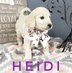 Heidi (1).jpeg