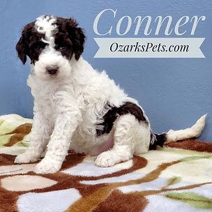 Conner (6).jpeg