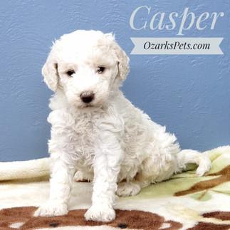 Casper (3).jpeg