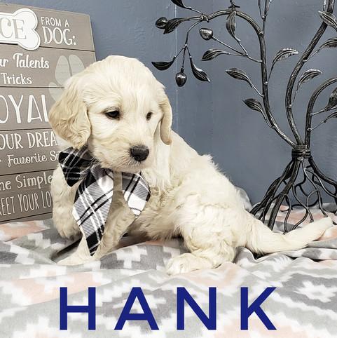 Hank (1).jpeg