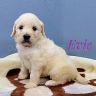 Evie (4).jpeg