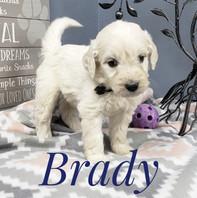 Brady (1).jpeg