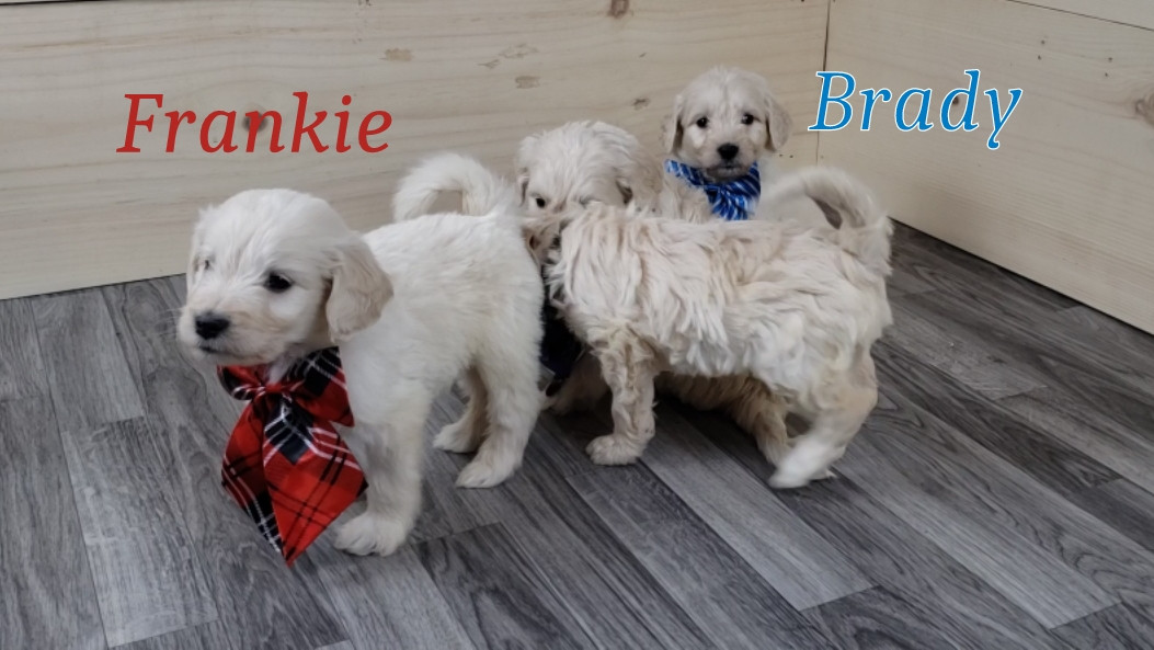 Frankie Brady.jpg