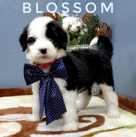 BLOSSOM (7).jpeg