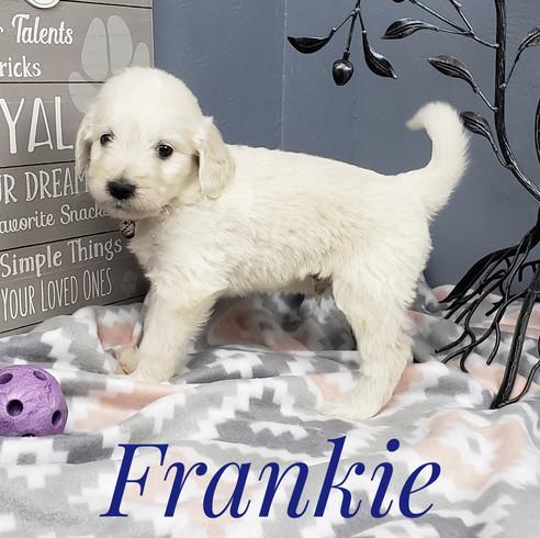 Frankie (2).jpeg