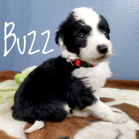 buzz (3).jpeg