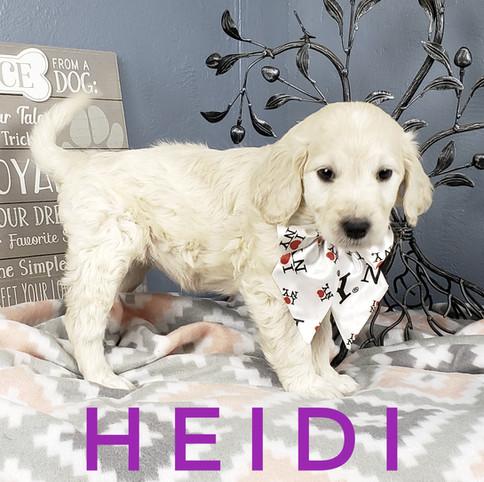 Heidi (6).jpeg