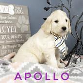 Apollo (5).jpeg