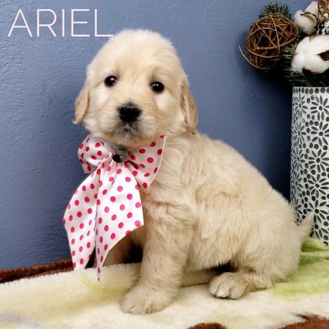 ARIEL (1).jpeg