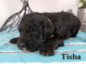 Tisha (3).jpg