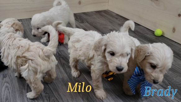 Milo Brady (2).jpg
