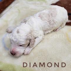 diamond (2).jpeg