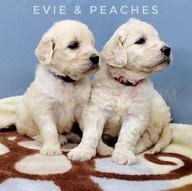 Evie Peaches (7).jpeg
